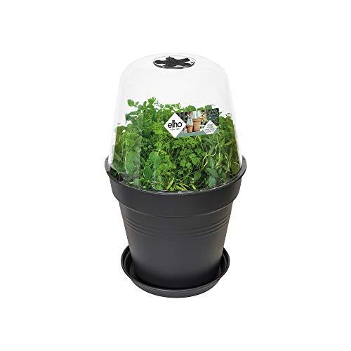 Elho Green Basics Anzucht Haus Rund 30 - Transparent - Drinnen & Draußen  - L 30 x W 30 x H 23.1 cm
