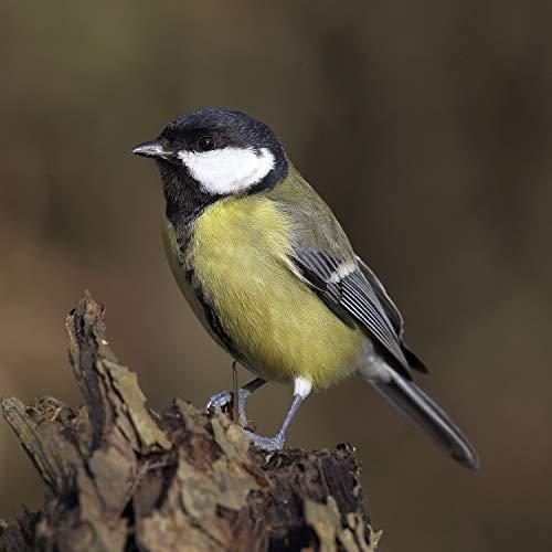 Pájaros En Los Árboles