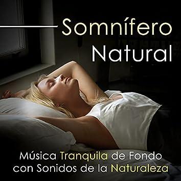 Somnífero Natural - Escucha esta Música Tranquila de Fondo con Sonidos de la Naturaleza para Ayudarte a Dormir y lograr una Buena Noche
