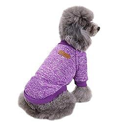 Image of Fashion Focus On Pet Dog...: Bestviewsreviews
