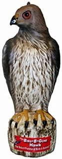 Bird B Gone MMRTH1 Hawk Decoy