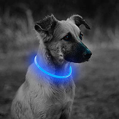 Amazon - Save 15%: Light Up LED Dog Collar – USB Rechargeable Glowing LED Puppy Collars, TPU Cut…