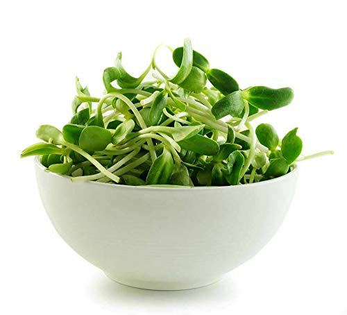 Micro-Greens Sunflower Seeds -Super-Food Best Tasting Micro-Green 100g Non GMO