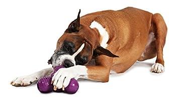 PetSafe - Jouet pour Chien Busy Buddy Squeak 'n Treat Troog (L), Jouet à Mâcher avec Couinement Distributeur de Friandises, Croquette en Caoutchouc – Solide et Résistant
