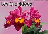 Monarchc, K: Orchidées (Calendrier mural 2020 DIN A3 horizon: Les orchidées exotiques (Calendrier mensuel, 14 Pages ) (Calvendo Nature)