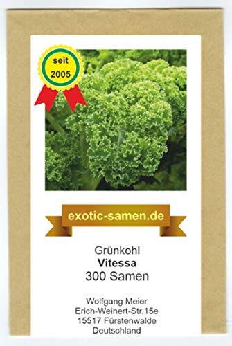 Grünkohl - Vitessa - niedrig wachsend - 300 Samen