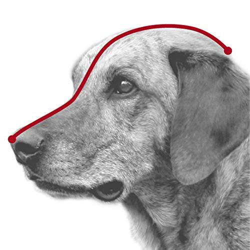 Trixie - Bozal para perro de cuero modelo Julius-K9.