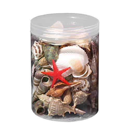 Xpccj Mixed Sea Beach Shells Crafts Seashells DIY Decorative Shells for Fish Tank, Aquarium, Desktop - Package Weight: 150g/190g/330g/500g