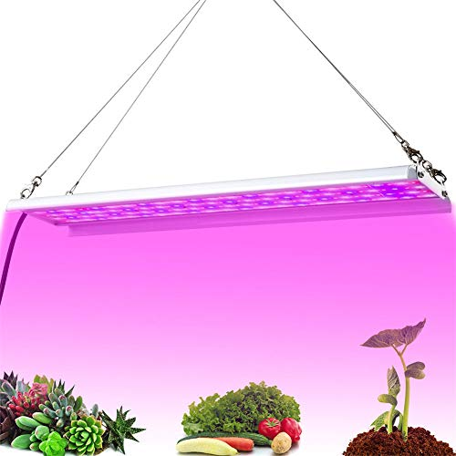 WQY LED Grow Light 1000W Full Spectrum Lámpara De Fito De Alta Eficiencia Luminosa para Carpa De Interior Invernadero Planta Hidropónica Flor