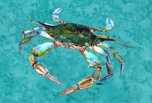 Carolines Treasures 8657PLMT Crab Fabric Placemat Large Multicolor
