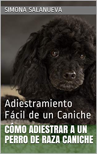 Cómo Adiestrar a Un Perro de Raza Caniche : Adiestramiento Fácil de un Caniche