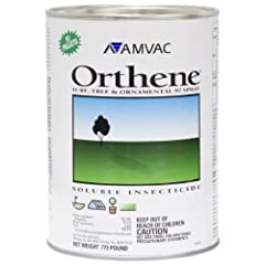 Acephate -- 97.4% Orthene 97 WP Turf Tree Ornamental - 1can (.773LB) is the proven choice for key insect control in dozens of high value vegetable crops as well as soybeans, cotton and tobacco. Common Rose Pests Controlled: Aphids Japanese Beetle Ten...