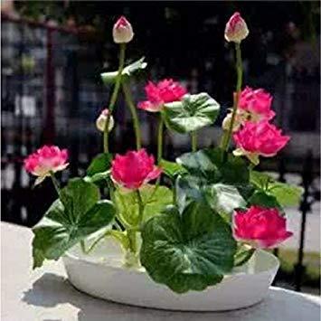 VISTARIC 11: Seltene Bonsai Kürbiskerne Cucurbita Golddraht Kürbis Garten Gewächshaus Bio-Gemüsesamen Geeignet für Kochen 20 PC/Beutel 11