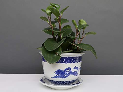 Yajutang Maceta de porcelana china con paisaje azul y blanco, diámetro de 17 cm