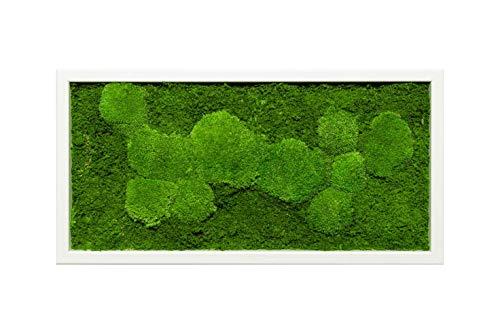 Moosbild Pflanzenbild mit Kugelmoos und Flachmoos versch. Maße günstig (Weiß, 60x30 cm)