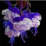 honic multipla di colore fucsia bonsai, bonsai balcone fiore fiori fucsia per le camere piante in vaso hanging fuchsia fiori 100 pezzi vendita: 2