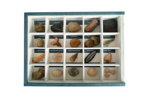 MINERALES Y FOSILES NANO Colección de 20 Fósiles del Mundo Premium en Caja de Madera Natural - Fósiles Reales educativos de Gran tamaño con Hoja de descripción. Kit Geología para niños