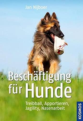 Beschäftigung für Hunde: Treibball, Apportieren, Nasenarbeit, Jagility