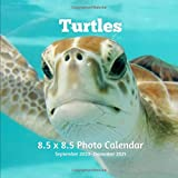 Turtles 8.5 X 8.5 Calendar September 2020 -December 2021: Monthly Calendar with U.S./UK/ Canadian/Christian/Jewish/Muslim Holidays-Marine Life