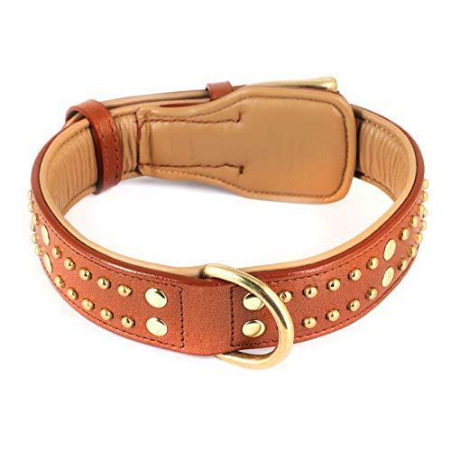 Monkimau Halsband für Hunde aus echt Leder mit Nieten gepolstert verstellbar M 35-40 cm