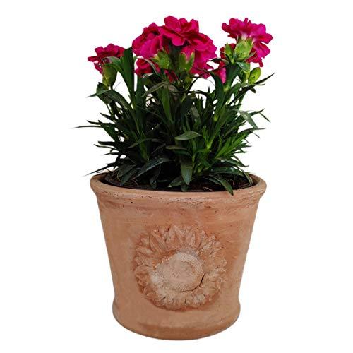 Macetero de terracota para flores, orquídeas, plantas suculentas y aromáticas, guindilla, cactus y bonsáis, diámetro artesanal, para exterior, interior y decorar tu jardín (cylindro)