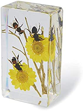 Honeybee Paperweight