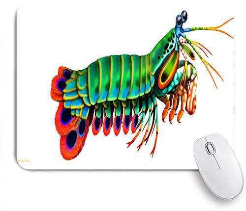 QINCO Gaming Mouse Pad Rutschfeste Gummibasis,Krebstiere Pfau Mantis Shrimp Reef Aquarium Salzwasser Stomatopoden Odontodactylus,für Computer Laptop Office Desk,240 x 200mm