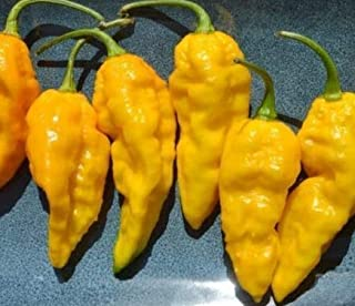 Seeds Yellow Ghost Pepper Bhut Jolokia Seeds Chili Rare Extremely Hot Fresh Seeds #EL01YN (15 Seeds)