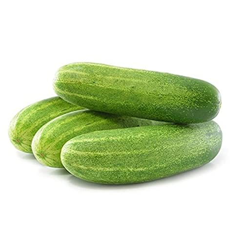 Kraft Seeds Cucumber F1 Hybrid Seeds with 100g Agro Peat (Multicolour, 50 Pieces)