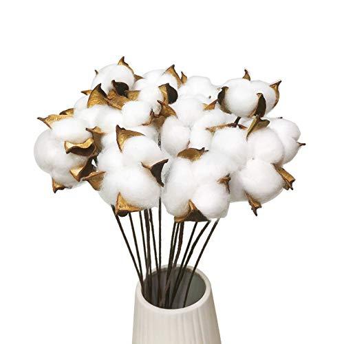 AIVORIUY 30pcs Ramo de Flores Secas Naturales Blanca Ramas Secas Decorativas Estilo...