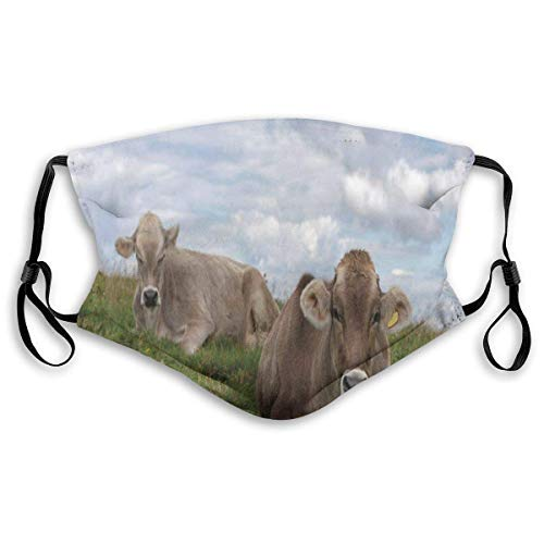 Winddichte Maske, themenorientiertes Landwirtschaftsfoto der ruhenden Kühe auf Wiese mit erstaunlichem bewölktem Himmel