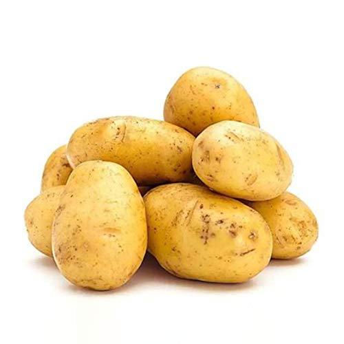 100pcs / bag Semillas de patata Vegetales Bonsai Plantas DIY Jardín de su casa Suministros