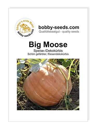 Big Moose Kürbissamen von Bobby-Seeds Portion