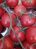 semi pomodoro -ciliegino rosso a grappolo