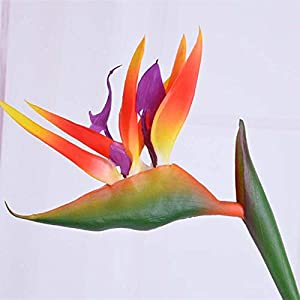 Artificial and Dried Flower 12CM Head/Length80CM Real Touch Fake Plastic Tropical Bird of Paradise Flower,Artificial Silk Long Flowers Home Decoration