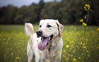 JYKFJカラフルなラブラドールレトリバーペットの犬-数字キットによるDIYダイヤモンド絵画-フルホールラインストーンクリスタル刺繡写真家の装飾のためのクロスステッチアートクラフト