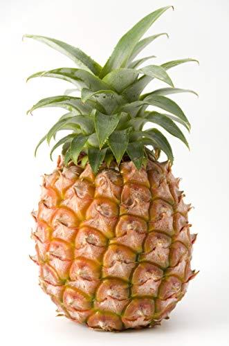 大阪北商事 【産地直送輸入】【台湾応援します】台湾産 パイナップル 金鑽パイン パイン 10kg 完熟 糖度18度(高糖度の時 個体差ございます) 残留農薬0