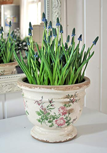 Chic Antique Blumentopf ° Toulouse ° mit romantischem Rosenmuster Gr. L * Creme Rosen Shabby Chic Übertopf Pokal antik