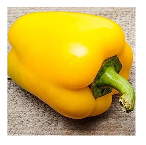 David's Garden Seeds Pepper Bell Canary SL2300 (Yellow) 50 Non-GMO, Heirloom Seeds