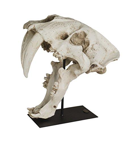Brillibrum Design Säbelzahntiger Schädel Totenkopf aus Kunststein Dekofigur Raubkatze Urzeit Tier Kunst-Skulptur Skelett Skull autenthisches Modell
