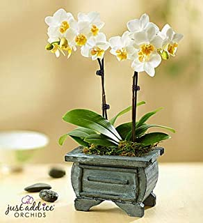 Best asian orchid plant Reviews