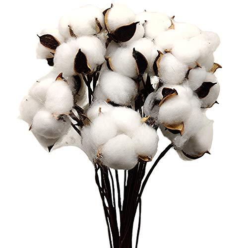 Aisamco 30 Pezzi Batuffoli di Cotone essiccati di Colore Naturale Rami di Cotone Bianco Scelti con Bastoncino Perfetto per ghirlande Regalo Artigianal