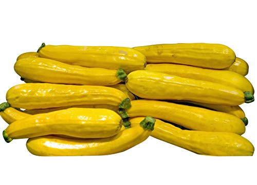 Zucchini -Gelb/Gold- 10 Samen -Super Ertrag-