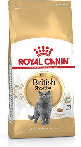 Royal Canin Feline British Shorthair, 1er Pack (1 x 4 kg Beutel) - Katzenfutter