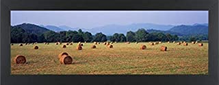 Easy Art Prints Panoramic Images's 'Hat Bales in a Field, U.S. Route 64, Murphy, North Carolina, USA' Premium Framed Canvas Art - 24