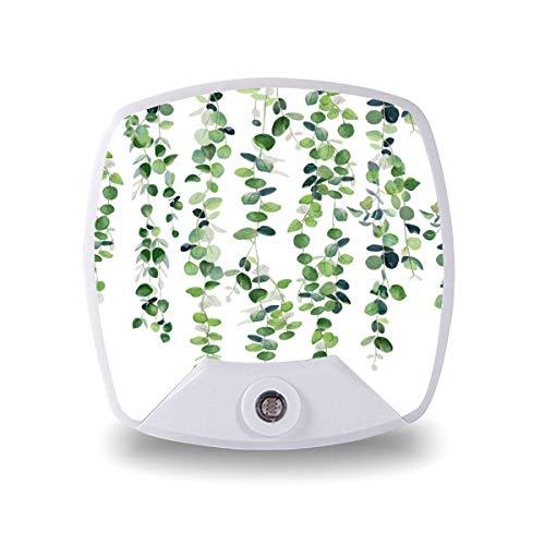 Lámpara LED de noche con sensor inteligente de atardecer a amanecer, guirnalda de eucalipto, lámpara blanca cálida para niños/niños, escaleras, pasillo, cocina, dormitorio