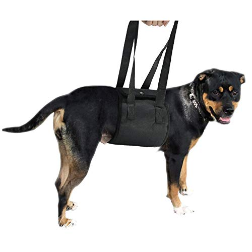 Pet Supply Dog Walking Lift Harness Sling,Helps Dogs with Weak Front Or Rear Legs Stand Up, Walk, Get into Cars, Climb Stairs. Best Alternative to Dog Wheelchair,Black,M