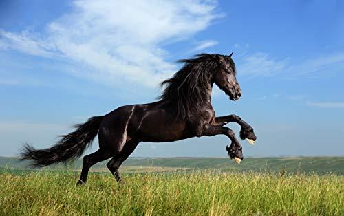 1000 stukjes puzzel Gratis sky cloud zwart paard 50x75cm