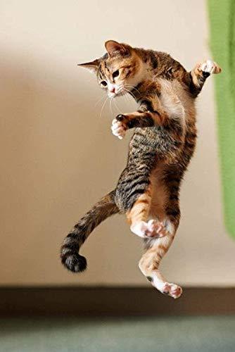 cibi dannosi per i gatti migliore guida acquisto