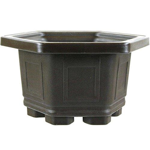 Bonsaischale 15x15x9.2cm Dunkelbraun Sechseckig Kunststoff